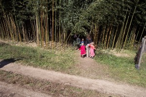 What about a walk in the bamboo forest!